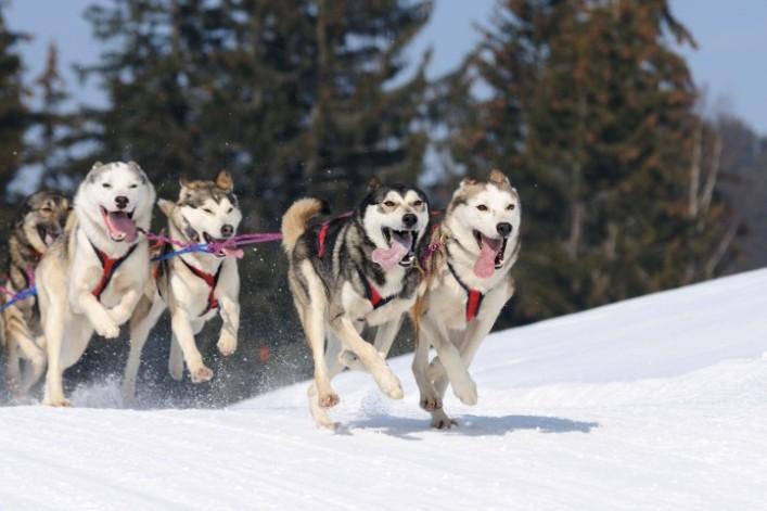 iStockphotoThinkstock-dogsled-2-e1350332968814